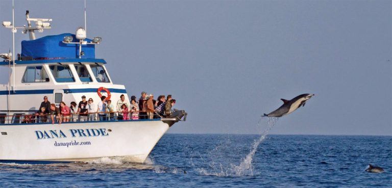 Dana Point Orange County Whale Watching Dana Wharf