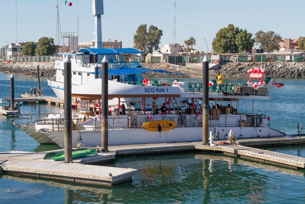 PuertoPenascoBajaEcoFun - Puerto-Penasco-Eco-Fun-Whale-Watching-Baja-Mexico-Boat.jpg