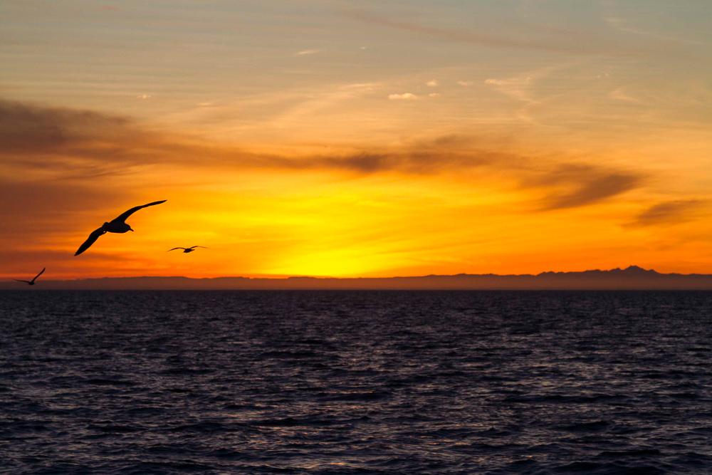 PuertoPenascoBajaEcoFun - Puerto-Penasco-Eco-Fun-Whale-Watching-Baja-Mexico-Sunset.jpg